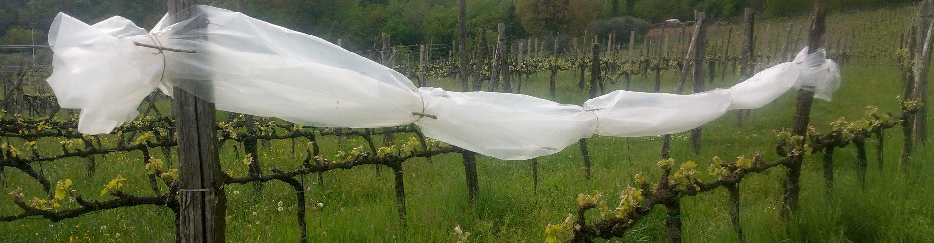 Incontro tecnico di monitoraggio fitosanitario in campo